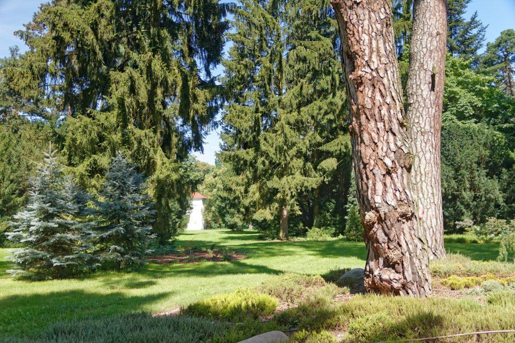 Arboretum in Kornik